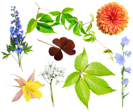 Flower and vegetative elements isolated on a white background Stock Photo - 9074664
