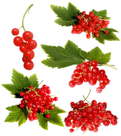 red currant: Different variants of a red currant