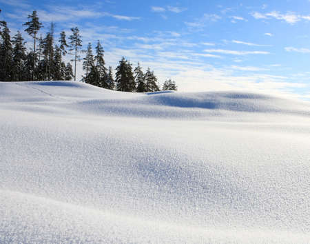 Landscape with a clean January snow  Stock Photo