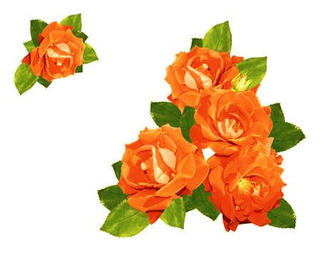 orange flower: Beautiful vintage roses  Stock Photo