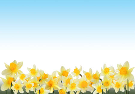 Beautiful frame with yellow narcissuses