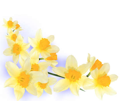 Decorative corner of yellow daffodils
