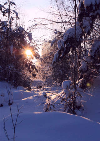 Winter evening landscape with setting sun in the forest Stock Photo