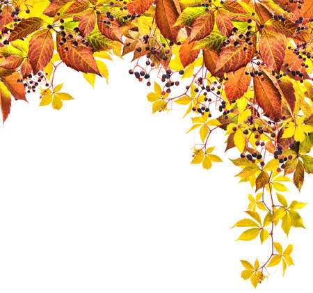 Autumn background with isolated yellow leaves and berries photo