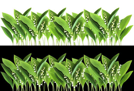 Lily of the Valley border isolated on white and black backgrounds photo