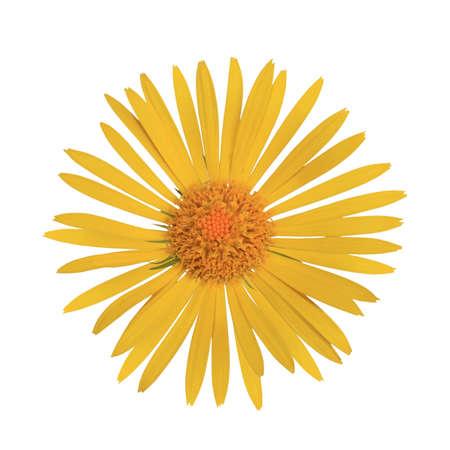 Beautiful yellow flower isolated on white background Stock Photo