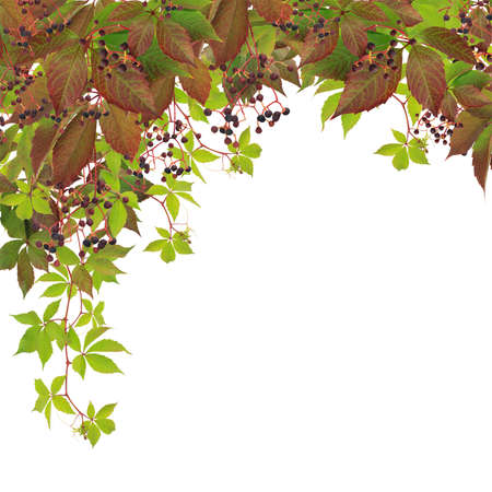 Branches with autumn leaves and berries isolated on white background Stock Photo