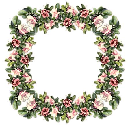 Vintage frame of wild rose isolated on white background