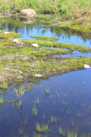 Summer wild landscape with swamp, standing water Stock Photo