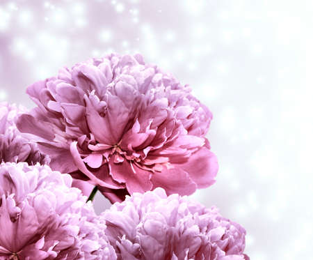 Bouquet beautiful pink peonies on the abstract background