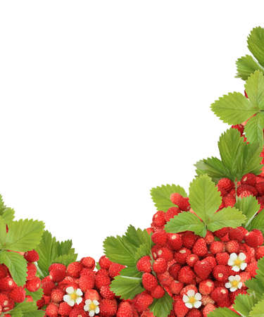 Fresh wild strawberries corner isolated on white background