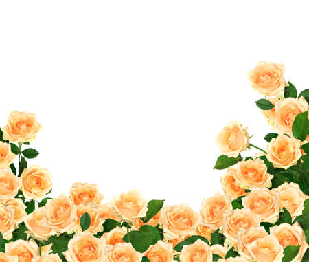 border of blooming orange roses photo