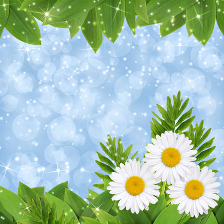 Square blue background with daisies and grass Stock Photo