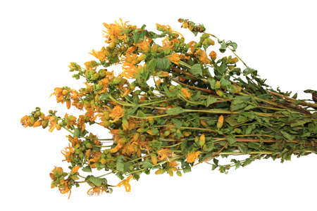 Bouquet of dried herb Hypericum perforatum on white background