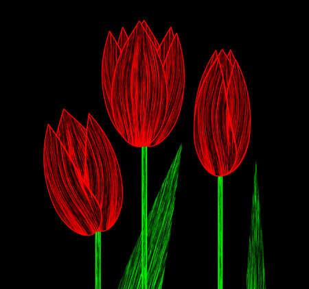 red tulip: Illustrated three red tulip isolated on black background