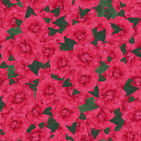 sfondo romantico: Bellissimo sfondo romantico senza soluzione di continuit� con le rose in fiore Archivio Fotografico