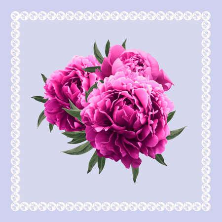 pfingstrosen: Violet dekorativen Hintergrund mit drei rosa Pfingstrosen