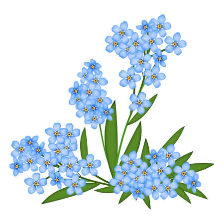 solitary: Illustrated blue forget-me-not isolated on a white background Stock Photo