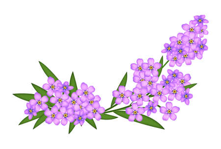 solo: Illustrated pink forget-me-not isolated on a white background Stock Photo