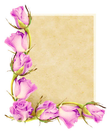 Illustrated old paper with roses isolated on a white background