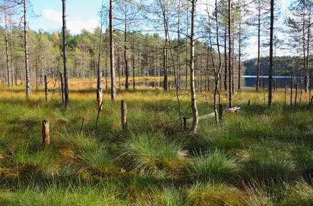 Boggy coast of wild lake, Russia, Leningrad region, Karelian isthmus
