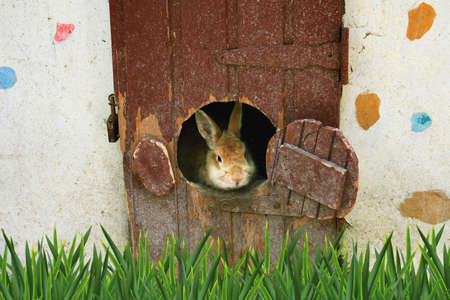 The rabbit looks from a round window of the house