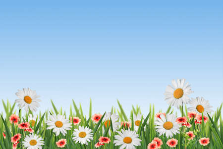 Decorative background with a grass and flowers on a background of the sky Stock Photo