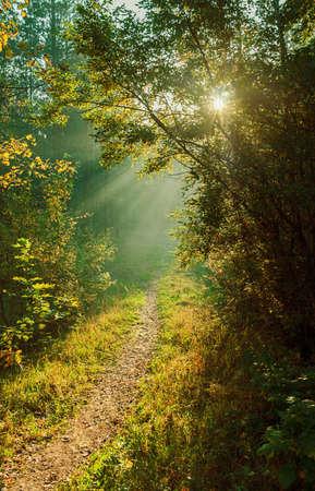 mystischer Weg im Wald beleuchtet durch die Sonnenstrahlen