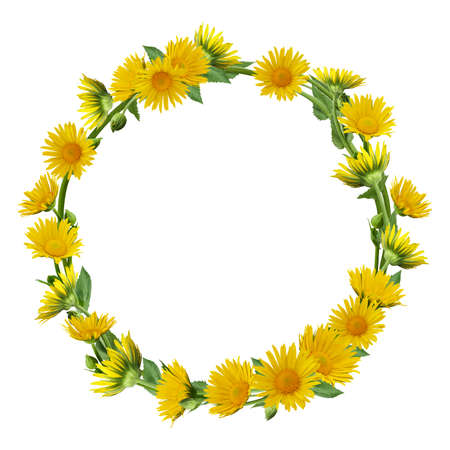 Wreath with yellow daisies isolated on white background