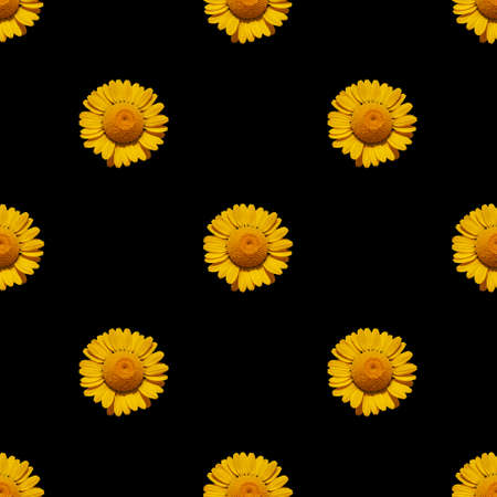 Abstract seamless black background with natural blooming yellow daisies