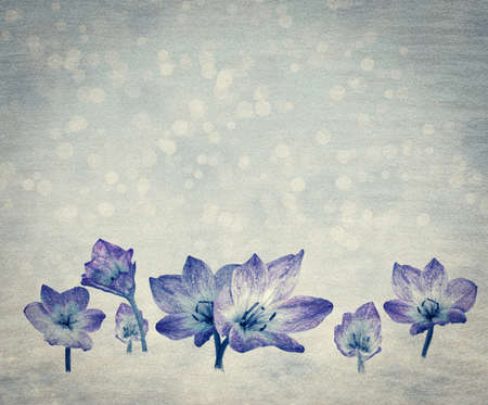 Spring background in blue colors with crocuses, aged background