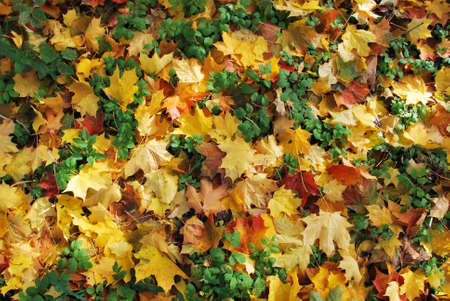 Leaves at autumn - many colors! Stock Photo - 8125825