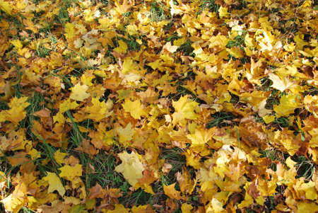 Leaves at autumn - many colors!