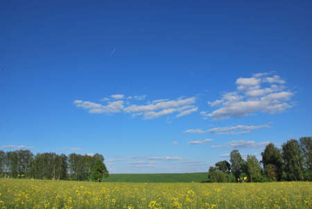 The summer field and a nice day Stock Photo - 8126038