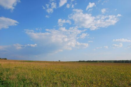 The summer field and a nice day