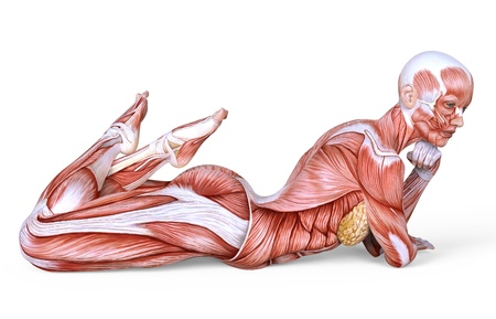Female anatomy and muscles, body without skin isolated on white Stock Photo