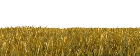 Autumn grass isolated on white background 3D illustration Stock Photo