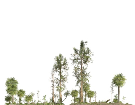Forest of the mesozoic era isolated on white background 3D illustration Zdjęcie Seryjne
