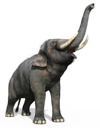 Indian Elephant isolated on white background 3d illustration