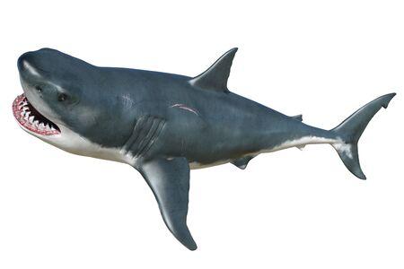 Requin illustration 3D isolé sur fond blanc Banque d'images