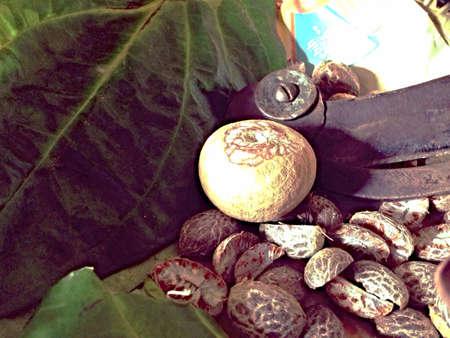 beside: A whole beetle nut beside its cutter in a basket