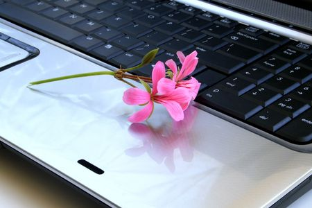 Flowers lying on laptops keyboard. 版權商用圖片