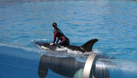 Orca whale (Killer whale) with women on the back