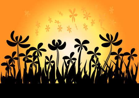 grass flowers: sundown background sunset and grass  flowers