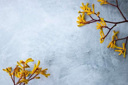 Yellow flowers kangaroo legs on marbled background 写真素材