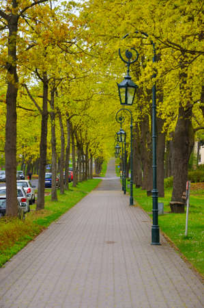 The alley with trees and lanterns (lamps) in the park near Men Monastery on a Frauenberg in Fulda, Hessen, Germany Stock Photo - 13224793