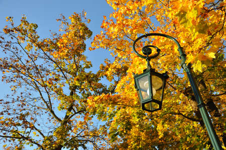 Lamp stand, yellow maple forest with blue sky in Fulda, Hessen, Germany photo