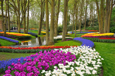 Colorful blooming tulips in Keukenhof park in Holland Imagens