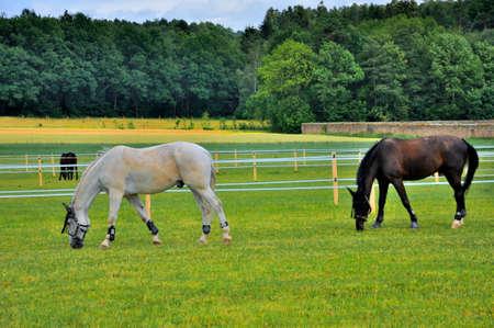 hessen: 2 horses eating grass near Schloss Fasanarie in Fulda, Hessen, Germany Stock Photo