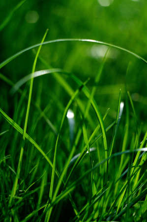 soggy: Colorful fresh green young grass close-up, Sergiev Posad, Moscow region, Russia Stock Photo
